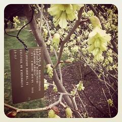 Grey arboretum adventure.