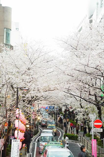 Sakuragaoka 03