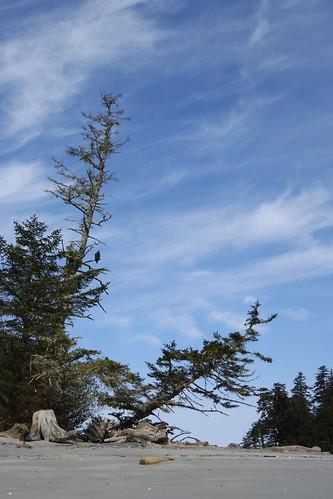 Lucy Island Eagle