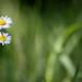 Le printemps ; c'est joli, pour se parler d'amour... by NUMERIK33