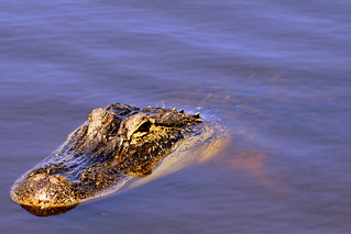 Gator Lake - Panama City Beach, Fl
