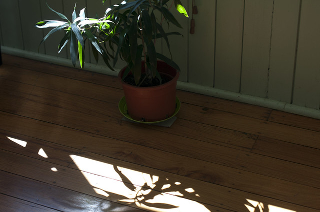 morning sunlight on timber