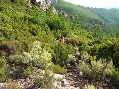 Sente de Capeddu : arrivée au col de Capeddu