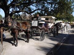 木, 2010-12-02 10:07 - Jackson Square前に待機する観光ロバ車 French Quarter, New Orleans