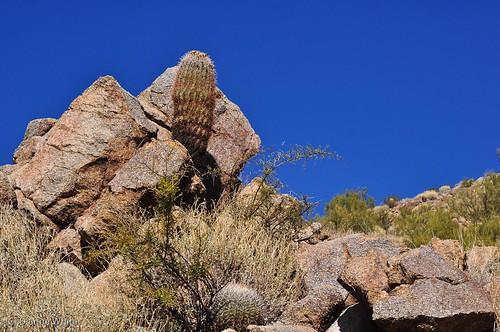 arizona tucson sonorandesert barrelcactus