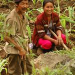 Tending the Fields - Yuksom, Sikkim