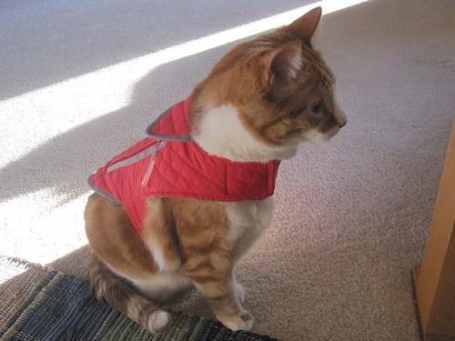 Frank the cat in vest