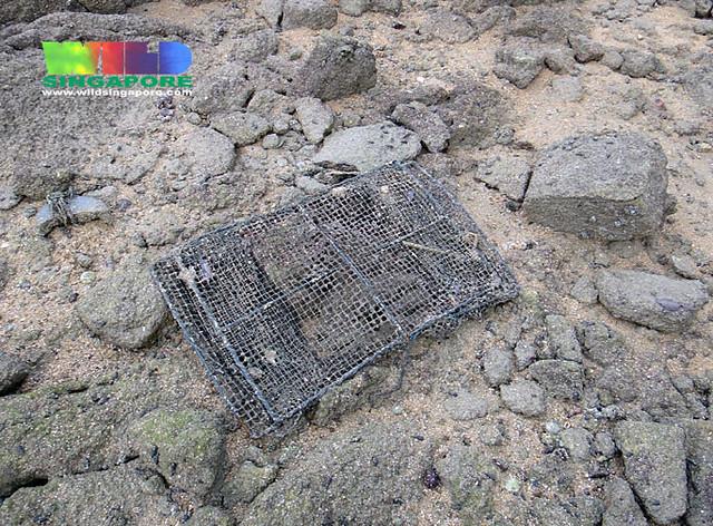 Abandoned fish trap