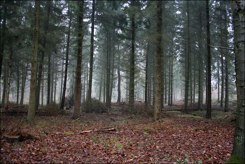 Back Wood, Bow Brickhill