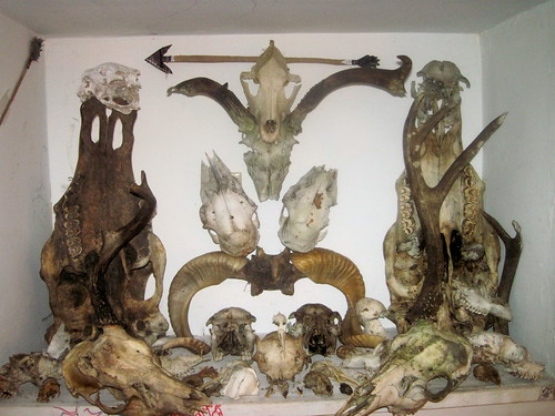 Partial skull collection