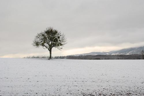 winter sky white snow cold tree nature dark landscape grey nikon italia tramonto nuvole natura cielo neve 1855mm albero inverno calabria paesaggio cosenza savuto d3000 pianolago