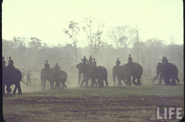 Mountaineers during elephant race during New Year's celebration