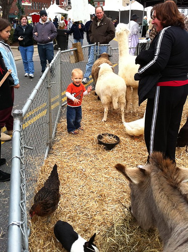 Wyatt at the Petting Zoo