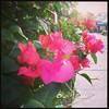 Bunga didepan rumah ortu di Penajam. #instakuliner #instafood #penajam