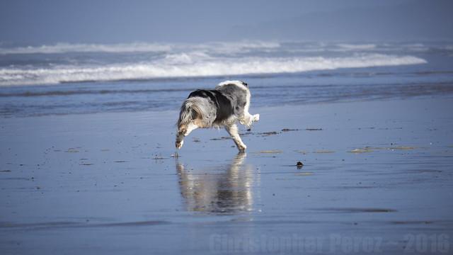 Maori ~ Jami's beach dog