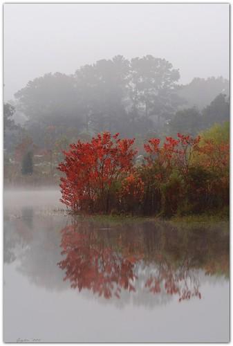 blackwaterconservationarea fog mist louisiana pond water island landscape tallowtree artistpicks canonef70300mmf4556isusm mrgreenjeans gaylon gaylonkeeling