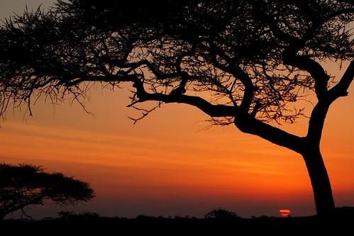 africa trees sunset sky orange sun sol kilimanjaro nature tanzania earth natureza laranja céu unescoworldheritagesite pôrdosol serengeti árvores silhuetas africansunset serengetinationalpark quénia miriammakeba
