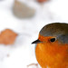 Macro Robin (snow and leaf bokeh) [Explored #5 - Front page] by Oliver C Wright