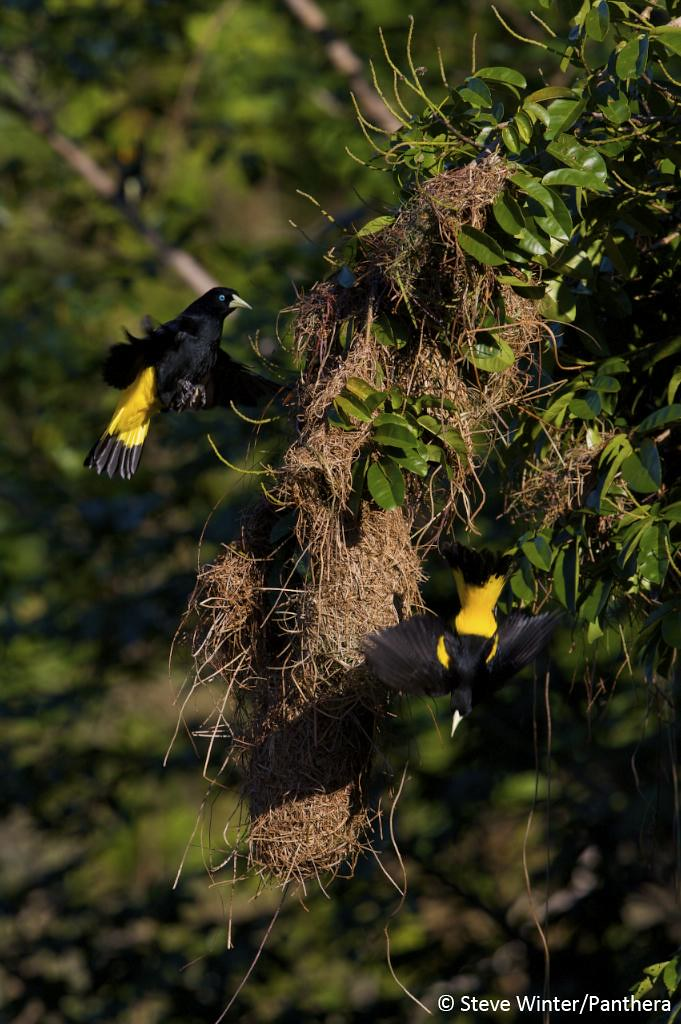 Birds in the Pantanal
