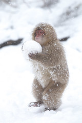 Carrying the Snow Ball