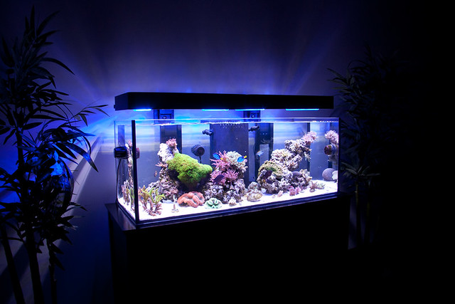 Saltwater Reef Tank with Panorama LED Fixtures