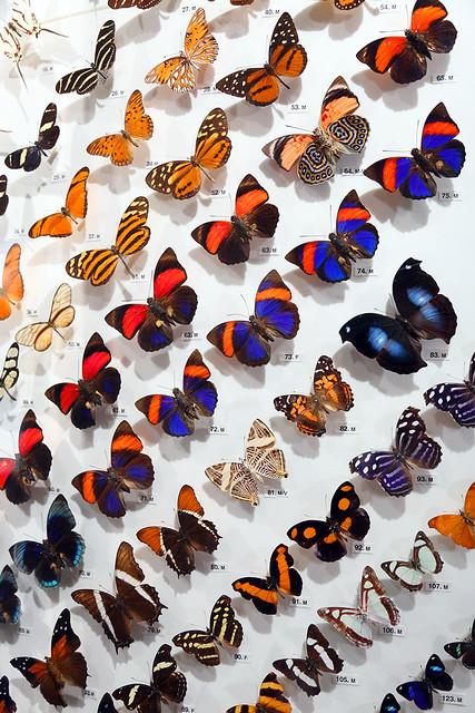 Hall of Butterflies Angle
