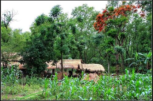 保育森林所帶來的潛在價值是很巨大的,圖為尼泊爾奇旺國家森林公園;圖片來源:赛伯时空·旅游博客http://www.17u.com/blog/article/524809.html