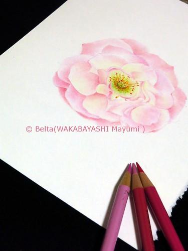 2014_04_15_rose_01_s