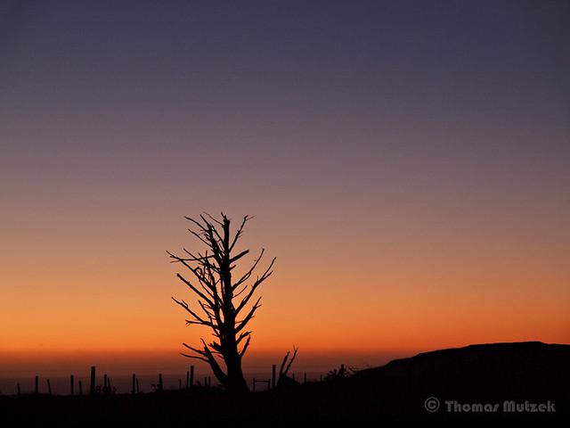 Dead Tree, Marin, California, 2009