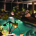 #10 Swimming Pool with Underwater Lighting