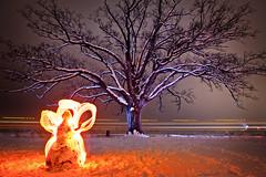 Burr Oak Snow Angel