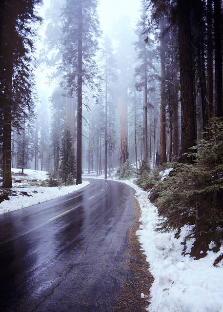 CAsequoia11