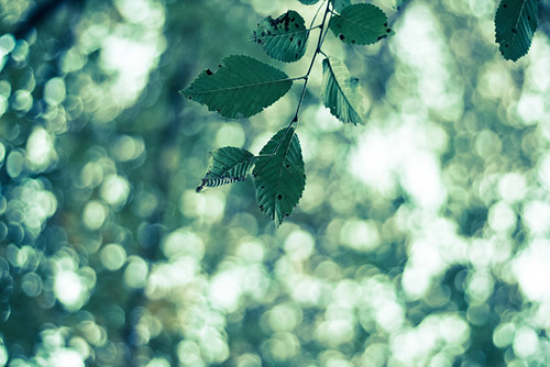 Il culto delle foglie ai giorni nostri - Leavescult today