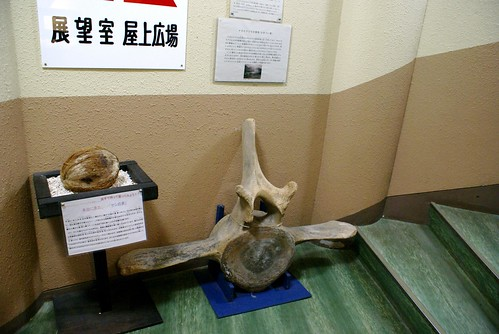 寺泊水族博物館