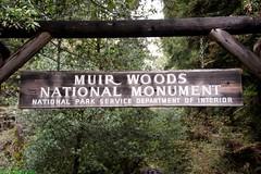 USA: CA, Muir Woods