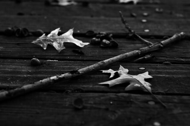 winter stick bw