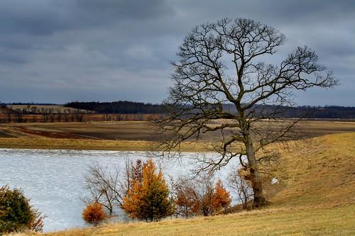 winter tree water rural solitude song scene iowa lone strength spiritual endurance gospel steadfast jeffersoncounty ishallnotbemoved