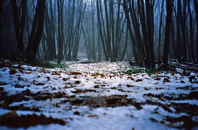 Maplehurst Woods