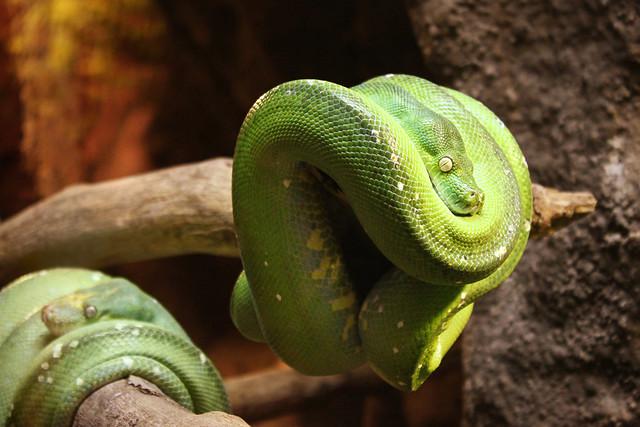 Green 2: Snake Eyes