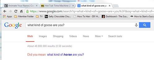 Goose Quiz