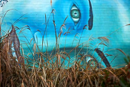 grass graffiti mural dof gordon ashby bigmomma flickrchallengegroup flickrchallengewinner thechallengefactory gordeau