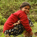 Working the Land - Sikkim
