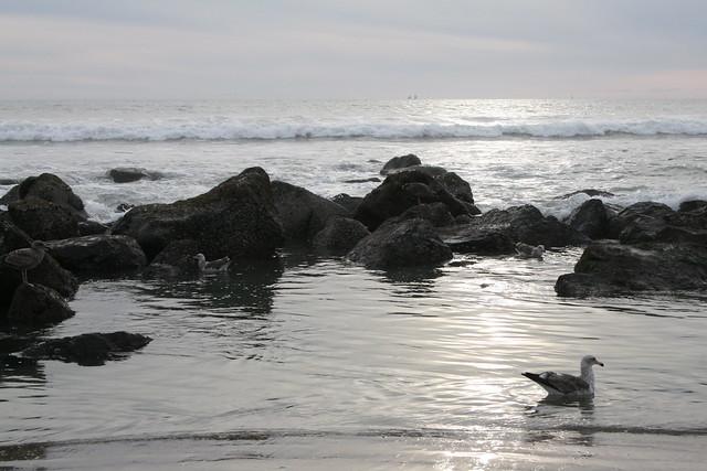 Coronado Island Beach Condo Monthly Rentals