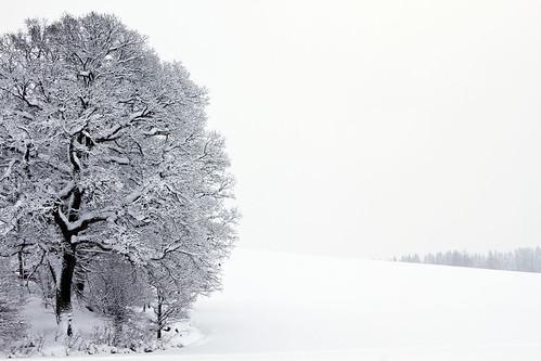 winter white snow tree oak sweden sverige östergötland bjärkasäby sigma70300mmf456apodgmacro canoneos7d