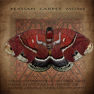 Persian carpet moth