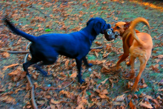 Rosie and Evie the blue black dog, by Wonderlane