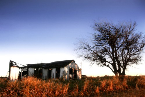morning winter tree grass december texas dry oldhouse southtexas canon30d