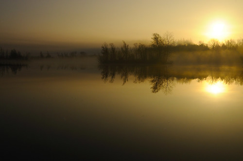 Foggy Sunrise at Puslinch Lake