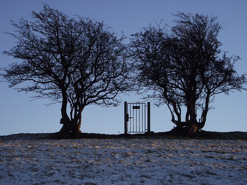 Two trees and a gate