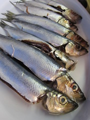 mackerel(0.0), perch(0.0), cod(0.0), pacific saury(0.0), sauries(0.0), forage fish(0.0), bonito(0.0), capelin(0.0), sardine(0.0), milkfish(0.0), animal(1.0), fish(1.0), fish(1.0), seafood(1.0), food(1.0), shishamo(1.0),